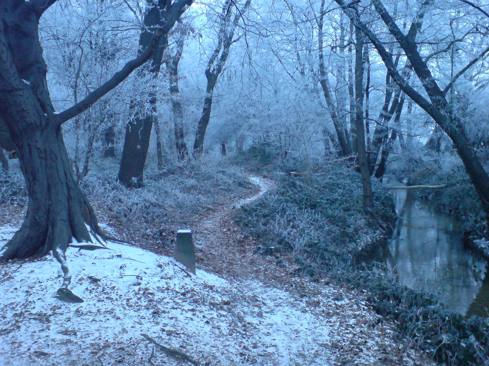 winter_forest_near_erzhausen_ii